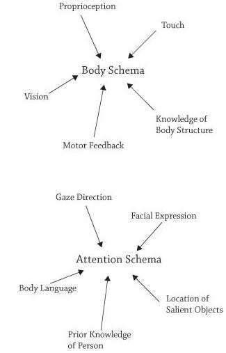 Body schema diagram diy wiring diagrams deric s mindblog a intriguing take on consciousness as a perceptual rh mindblog dericbownds net schema ccuart Images
