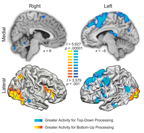 Deric's MindBlog: How you feel - the brain's bottom up and ...