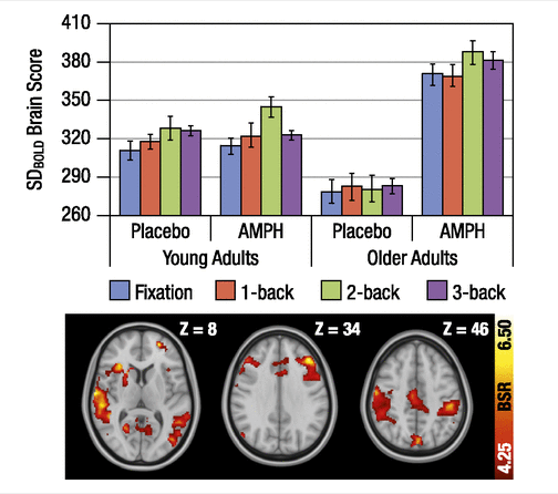 A bit of amphetamine turns older brains into younger brains.