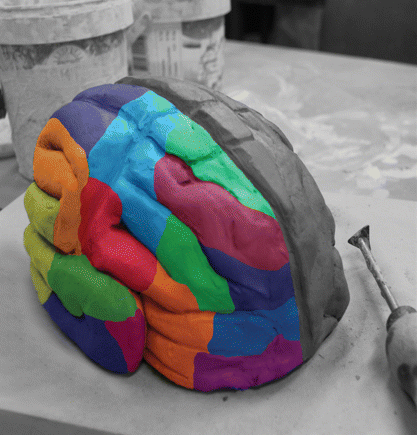 Make 3D Brain Model http://mindblog.dericbownds.net/2009_10_01_archive.html