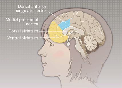 deric s mindblog how our prefrontal cortex explores and exploits